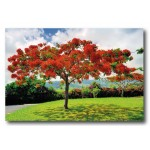 Photo sur papier brillant (190g/m2) 40x60 cm