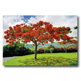 Photo satin ou brillant (190g/m2) 40x60 cm