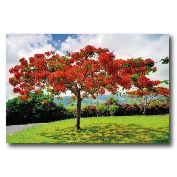 Photo satin ou brillant (190g/m2) 40x60 cm